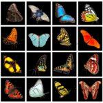 Αρχαίοι Έλληνες φιλόσοφοι και η εξέλιξη των ειδών